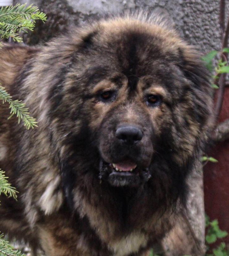 View Testimonials & Reviews for Lion's Home Kennel